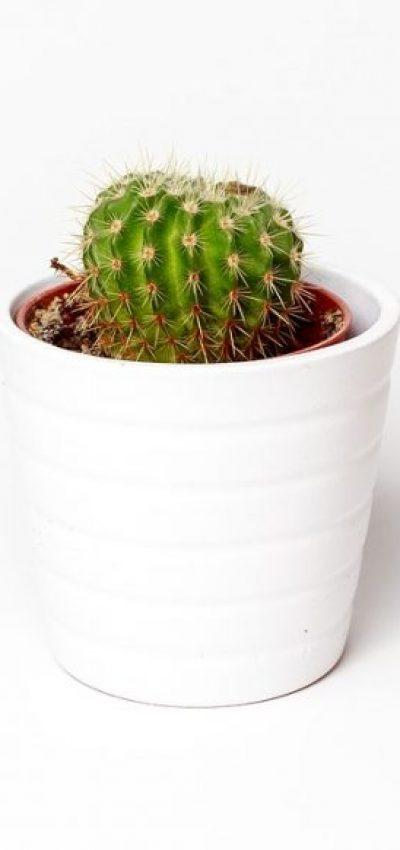 cactus-1842095_1280